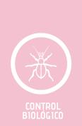 Control Biológico
