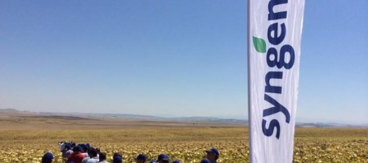 Syngenta presenta sus dos nuevas variedades de girasol, Sy Kiara y Sy Bento