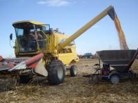 Resultados de nuevas variedades de maíz para grano de ciclo 600 y 500
