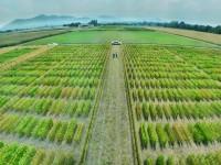 Cultivos energéticos y agricultura sostenible