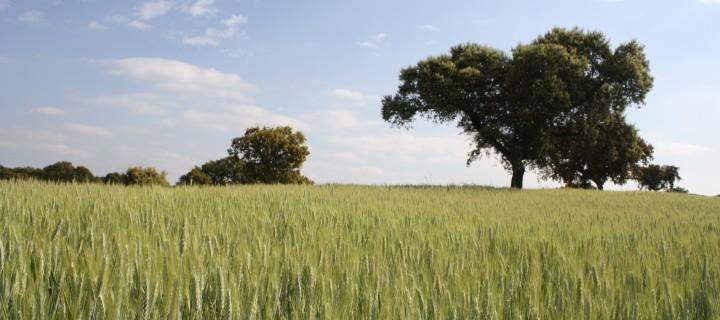 Biofortificación agronómica de los cultivos: el caso del selenio en España