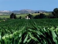 Guía de Buenas Prácticas para el cultivo de Maíz Bt para la campaña 2014