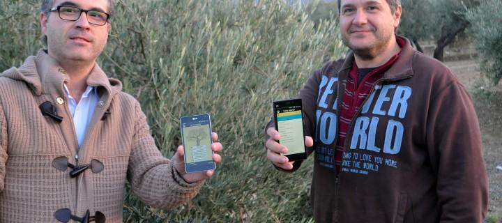 Mi Cosecha 2.0, la nueva versión app para la recogida de la aceituna