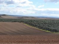 Abierto el plazo para solicitar de dos líneas de ayudas incluidas en el PDR de Andalucía