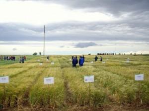 Evaluación de nuevas variedades comerciales de cebada, triticale y avena en España