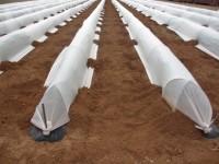 Resultados del Proyecto Cero en el cultivo de pimiento del tipo italiano al aire libre