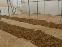 Eficacia de la biosolarización del suelo en el control de patógenos en cultivos enarenados