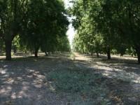 Gestión del riego y potencialidad productiva del almendro