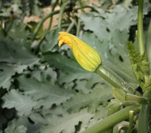 calabacinbaby (FILEminimizer)