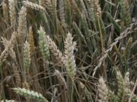 AgroHorizonte 2020 analiza los cultivos herbáceos de alto valor añadido