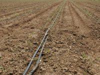 El asesoramiento al riego en Andalucía a través de Servifapa
