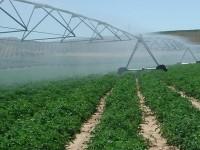 El Magrama presenta las líneas de la Asociación Europea por la Innovación de la agricultura