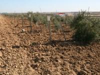 España riega más superficie y de forma más eficiente