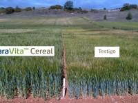 Ensayos realizados con YaraVita Cereal revelan un incremento de la producción media del 11%