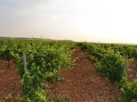 Sensores inalámbricos remotos para mejorar la producción y rentabilidad de los viñedos