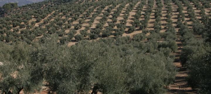 Andalucía destina 451,5 M€ para desarrollar actuaciones agroambientales y ecológicas dentro de su PDR 2014-2020