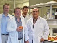 Proyecto Traditom para revalorizar las variedades tradicionales de tomate y mejorar su competitividad sectorial