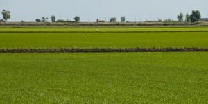 arrozal (FILEminimizer)