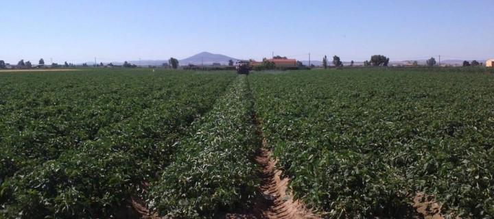 Software para reducir el consumo de agua hasta un 30% en los cultivos