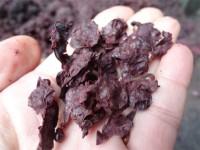 Cuatro agroindustrias se convertirán en centros logísticos de biomasa con el apoyo del proyecto Sucellog