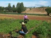 Cambian las bases de los Premios de Excelencia a la Innovación para Mujeres Rurales