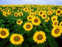 Última semana para presentar proyectos agroalimentarios a la aceleradora Orizont