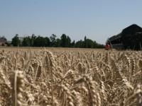 Los efectos del cambio climático empiezan a notarse en el campo