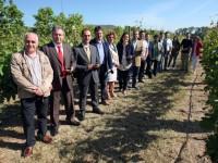 Una app desarrollada por la Universidad de La Rioja permite predecir el volumen de cosecha del viñedo