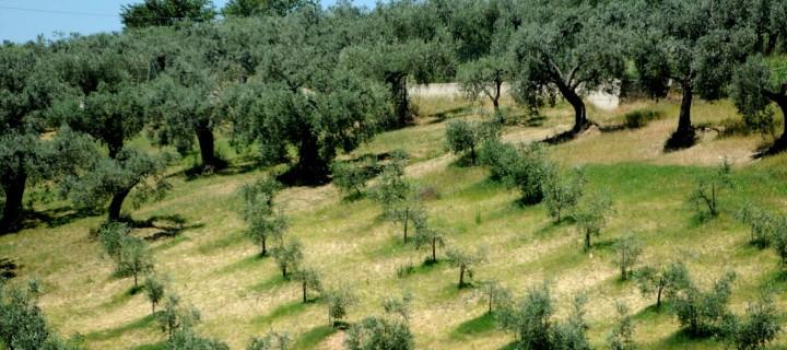 La Junta de Andalucía incluye novedades de la Orden de incorporación de jóvenes agricultores a la actividad agraria