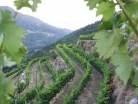 La Rioja destina 11,5 M€ del PDR 2014-2020 en apoyo de emprendores agrarios para mejorar su capacitación profesional