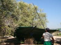 Andalucía convoca ayudas de 20 M€ para la incorporación de jóvenes a la actividad agraria en 2015