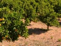 La Generalitat de Valencia envía a la Comisión Europea el PDR definitivo para su aprobación