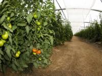 Un dron para mejorar los sistemas de control del clima y monitorizar cultivos en invernaderos