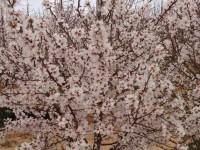 El CITA se abre paso entre los productores de almendra australianos