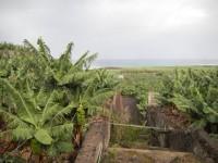Seis ámbitos prioritarios en el PDR de las Islas Canarias que contará con 185 millones de euros