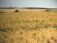 La UE aprueba ayudas para el campo andaluz por un valor de 2.400 millones de euros