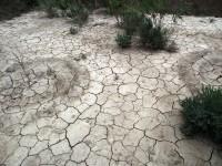 La UMH participa en un estudio de evaluación de los suelos en Europa y China
