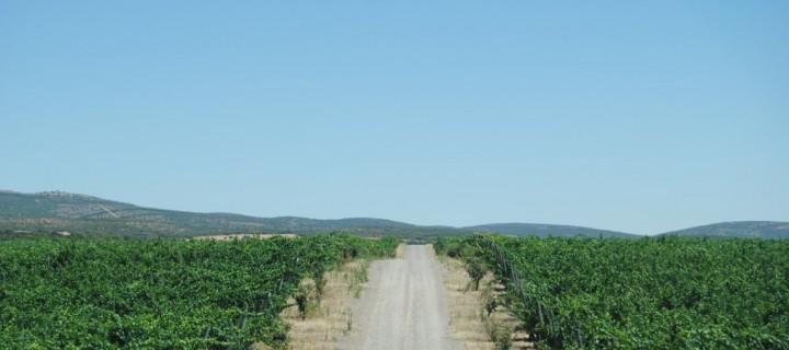 Pago del Vicario, viticultura de precisión a la orden del día