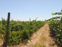 Las CCAA recibirán 72,5 millones de euros para la restauración y reconversión del viñedo en 2016
