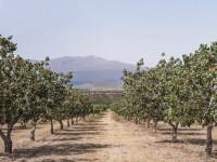 Cinco explotaciones leridanas se suman a Borges Internacional Group para plantar pistacho en la zona del Segarra-Garrigues