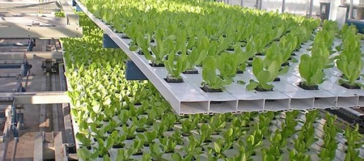 Reducir la contaminación de suelos y acuíferos por los drenajes de los cultivos