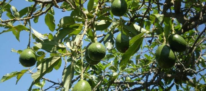 El Consejo de Ingenieros Agrícolas apoyará la innovación en Fruit Attraction