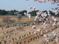 Lucha por mantener la autenticidad de la variedad Tinta del País de Bodegas La Horra