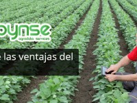 Dinsa presentará la primera Big Data para agricultura en Fruit Attraction