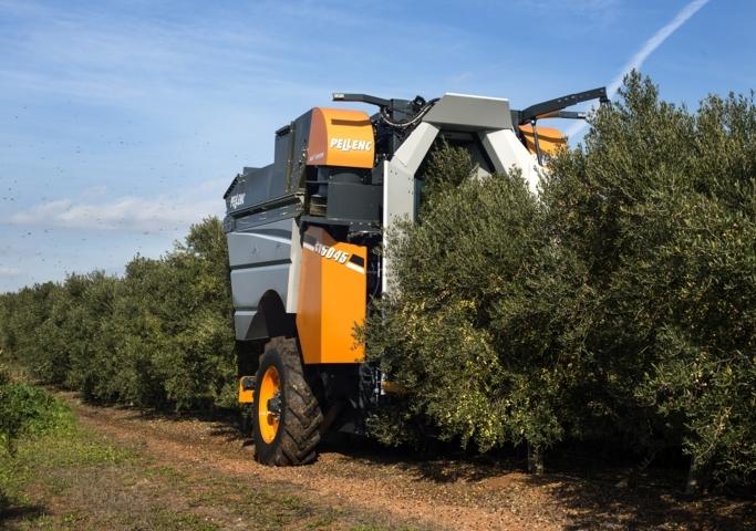 Recogida de olivas con maquina