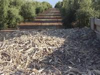 El CIEMAT inicia el Proyecto Cleambion sobre sostenibilidad y control de la biomasa residual