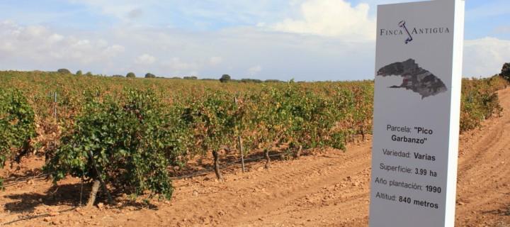 Finca Antigua, innovación y creatividad en la elaboración de vinos vanguardistas