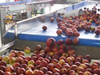Tecnova introduce un sensor de impactos para evitar daños en los frutos en la manipulación