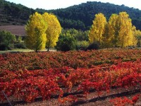Agricultores navarros participan en un proyecto europeo para mejorar la biodiversidad de terrenos agrícolas