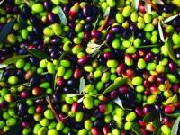 Innoliva convierte 45.000 toneladas de desecho de aceituna en biomasa